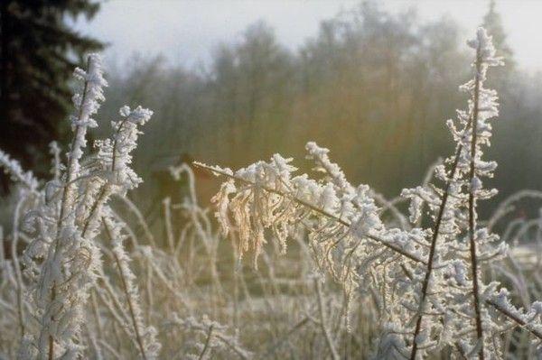 L'hiver et son décor ... dans Belles images