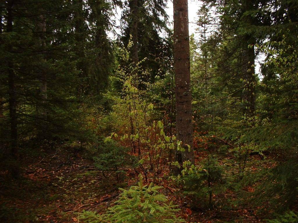 For u00eats, bois, et sous bois # Fiscalité Bois Et Forêts