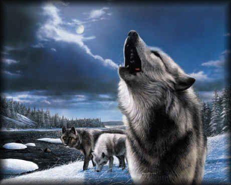 fond d'ecran 3d loup