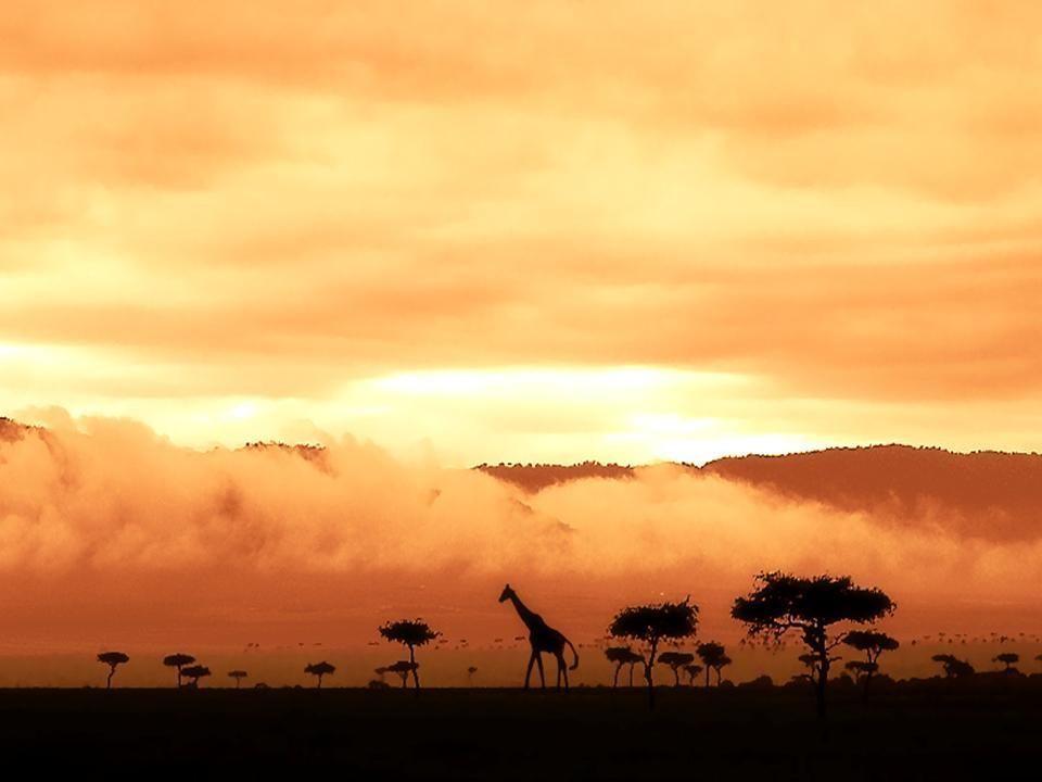 Animaux d 39 afrique - Dessin paysage africain ...