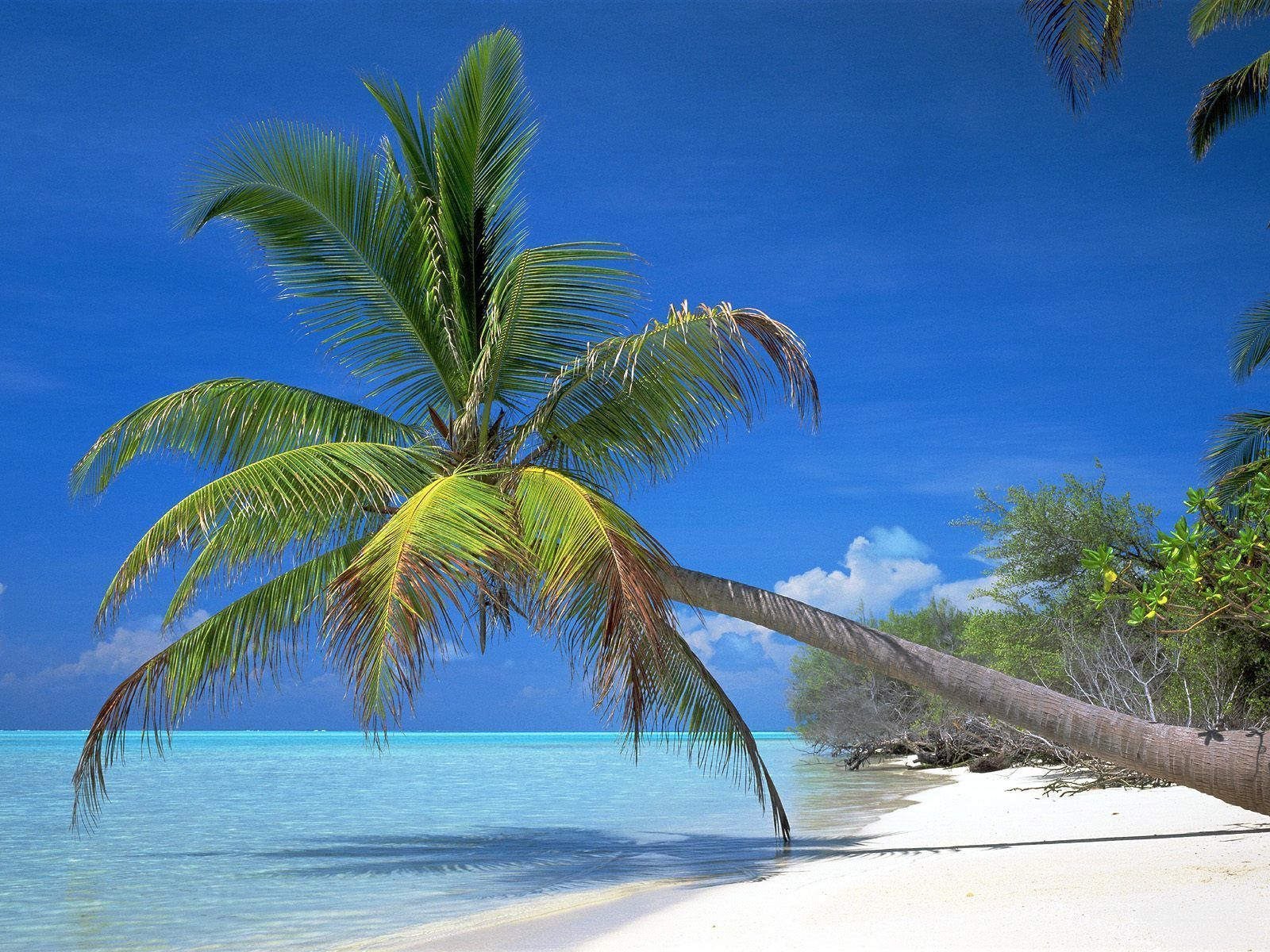 Gratis Vuxen Dating Amerikansk Strand Florida