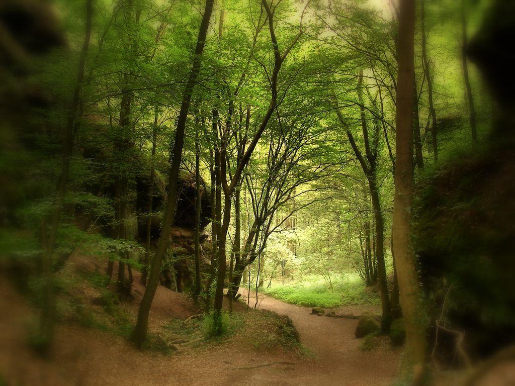 Forets et bois Page 16 # Fiscalité Bois Et Forêts