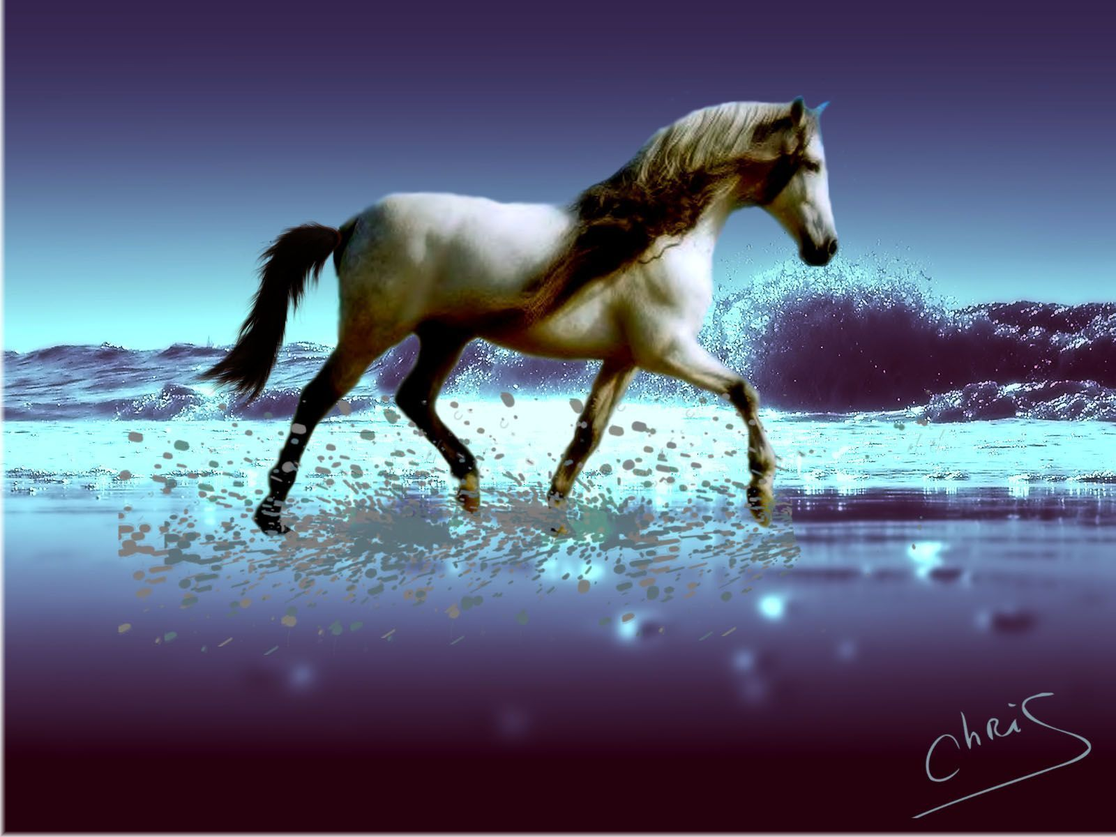 fond d'ecran anime cheval